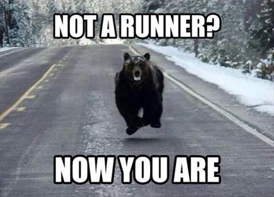 chased by bear